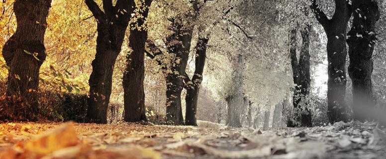 fysio Nijmegen, fysiotherapie Nijmegen, fysio herfst, fysiotherapie herfst, Nijmegen herfst, fysio winter, fysiotherapie winter, Nijmegen winter, Fysio dip, fysiotherapie dip, nijmegen dip